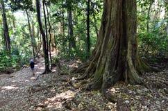 Zet de Gouden Kust Queensland Australië van Tamborine op Royalty-vrije Stock Foto's