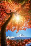 Zet Fuji in Autumn Color, Japan op Stock Foto's