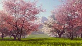 Zet Fuji en de bloeiende langzame motie van kersenbomen 4K op stock videobeelden