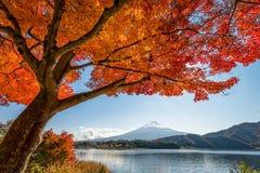Zet Fuji met esdoornboom op Stock Foto