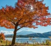 Zet Fuji met esdoornboom op Royalty-vrije Stock Fotografie