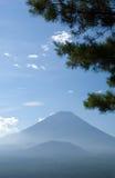 Zet Fuji met pijnboomboom op Stock Foto