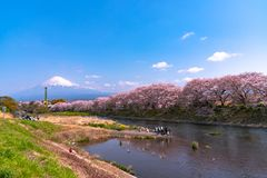 Zet Fuji op (MT Fuji) met Sakura-kersenbloesem bij de rivier in de ochtend, Shizuoka, Japan royalty-vrije stock afbeeldingen