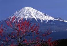 Zet Fuji XV op Royalty-vrije Stock Afbeeldingen