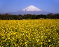 Zet Fuji XXVI op Stock Foto's