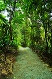 Zet het Nationale Park van Tamborine op Royalty-vrije Stock Foto's