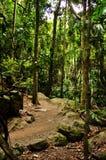 Zet het Nationale Park van Tamborine op Stock Foto
