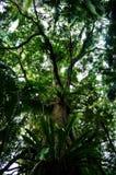 Zet het Nationale Park van Tamborine op Stock Afbeeldingen