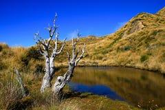 Zet Hikurangi-meer, Nieuw Zeeland op royalty-vrije stock afbeeldingen