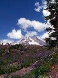 Zet Hood Above Timberline Lodge Oregon op Royalty-vrije Stock Fotografie