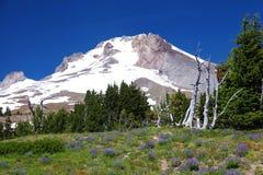Zet Kap in Oregon op Stock Afbeelding
