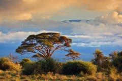 Zet Kilimanjaro op. Savanne in Amboseli, Kenia Royalty-vrije Stock Afbeeldingen