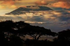 Zet Kilimanjaro op. Savanne in Amboseli, Kenia Stock Fotografie
