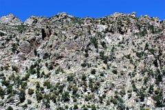 Zet Lemmon, Tucson, Arizona, Verenigde Staten op stock fotografie