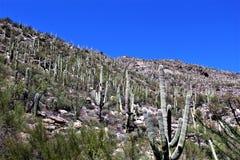 Zet Lemmon, Tucson, Arizona, Verenigde Staten op royalty-vrije stock foto