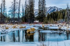 Zet Lorrett-Vijvers, het Gebied van het de Wildernisgebied van de Boogvallei, Alberta, Canada op Stock Fotografie