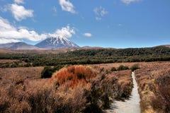 Zet Ngauruhoe in Nationaal Park Tongariro op Royalty-vrije Stock Foto