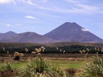 Zet Noodlot in Nieuw Zeeland op stock foto
