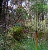 Zet Opmerkelijke Flora op Royalty-vrije Stock Afbeelding