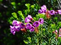 Zet Rainier Flowers op Royalty-vrije Stock Foto's