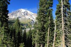Zet Rainier National Park Washington State Verenigde Staten op Royalty-vrije Stock Foto's