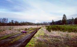 Zet Rainier View op Stock Afbeelding