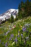 Zet Regenachtiger en WIldflowers op stock afbeelding