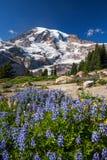 Zet Regenachtiger en WIldflowers op royalty-vrije stock afbeeldingen