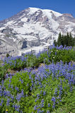 Zet Regenachtiger Nationaal Park Washington op stock afbeelding