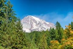 Zet Regenachtiger op omringd door bomen, WA royalty-vrije stock fotografie