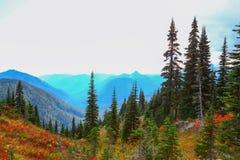 Zet Regenachtiger, Washington op royalty-vrije stock foto