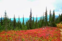 Zet Regenachtiger, Washington op stock foto