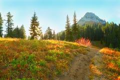 Zet Regenachtiger, Washington op Paradijssleep royalty-vrije stock fotografie