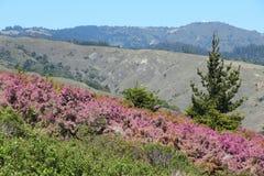 Zet Tamalpais-het Park van de Staat op royalty-vrije stock afbeelding