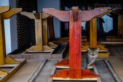 Zeuge von Sitzen Stockfoto