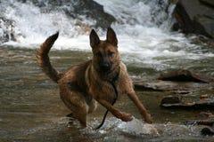 Zeus in Stream2 Immagini Stock