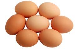 Zeven Eieren die op witte achtergrond worden geïsoleerdd Stock Foto