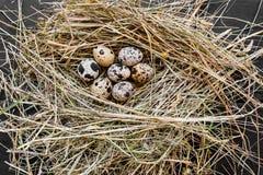 Zeven Kwartelseieren in Hay Nest stock foto