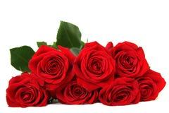 Zeven rode rozen Royalty-vrije Stock Foto's