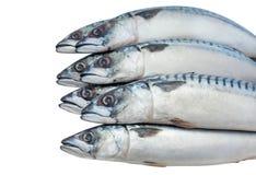 Zeven van ruwe, verse makreel liggen op elkaar op een witte, geïsoleerde achtergrond Stock Foto's