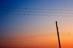 Zeven vogels op een zonsondergang Royalty-vrije Stock Afbeeldingen