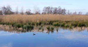 Zevenhuizerplas vicino a Rotterdam fotografie stock libere da diritti