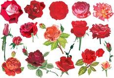 Zeventien rode rozeninzameling Royalty-vrije Stock Foto's