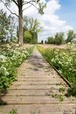 Zeveren Plancke en verano con las flores Imagenes de archivo