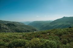 Zezere River valley. A long green canyon formed by glacier thousands of years ago, in a sunny day at the Serra da Estrela. The highest mountain range in stock photos