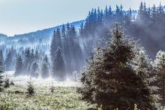 Zgłębia w fogy las obrazy royalty free