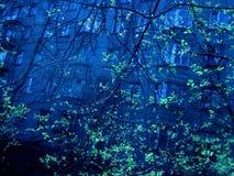Zgłębia błękitnego miastowego widok z zieloną drzewa nd dużego budynku ścianą Zdjęcia Stock