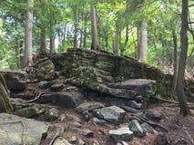 Zgłębia chowanego las Obraz Royalty Free