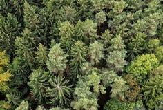 Zgłębia lasowych drzewa od above - krajobraz Obraz Royalty Free