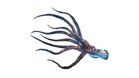 zgłębia ośmiornicy odosobnionego morze ilustracja wektor